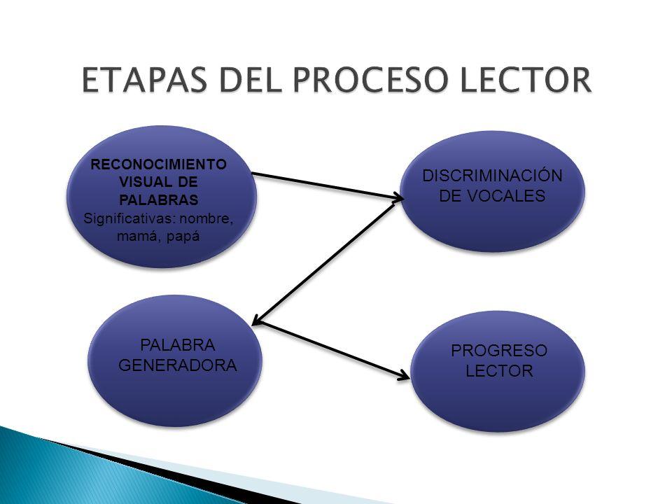 ETAPAS DEL PROCESO LECTOR