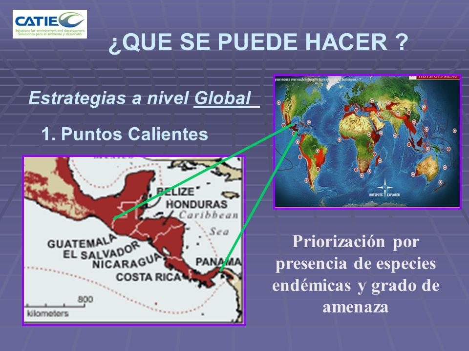 ¿QUE SE PUEDE HACER Estrategias a nivel Global 1. Puntos Calientes