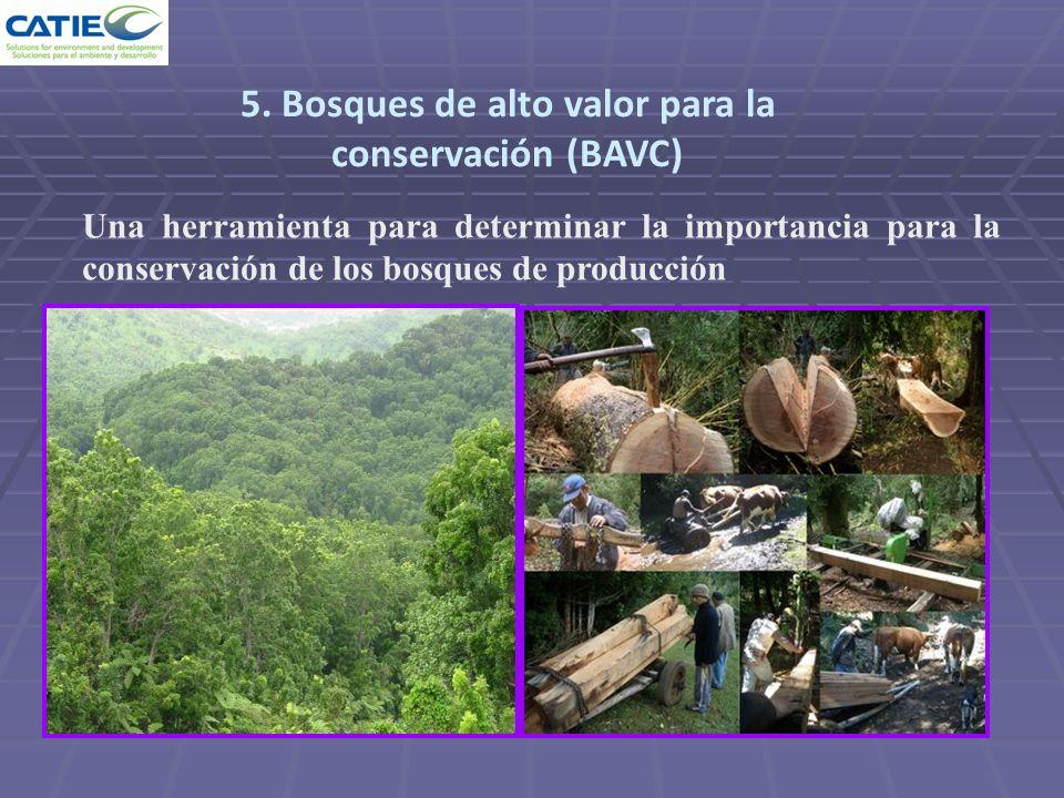 5. Bosques de alto valor para la conservación (BAVC)