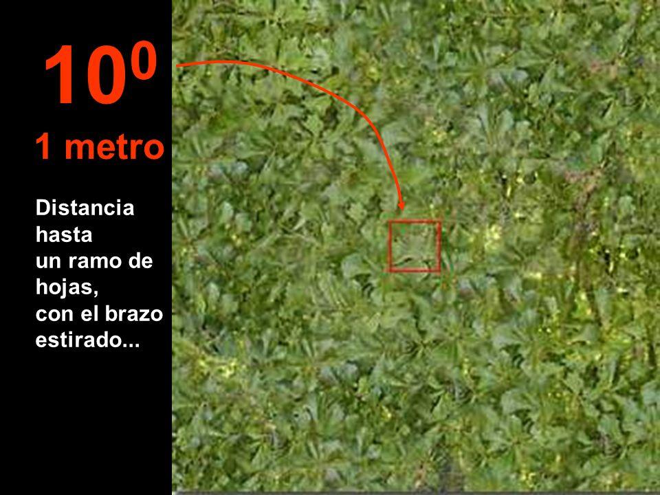 100 1 metro Distancia hasta un ramo de hojas, con el brazo estirado...