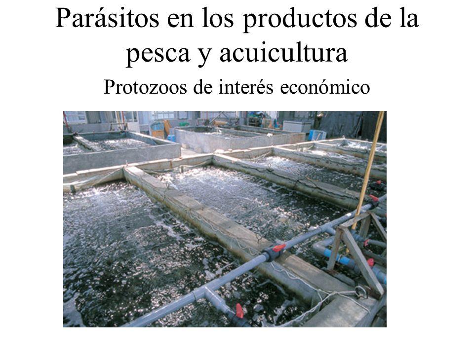 Parásitos en los productos de la pesca y acuicultura