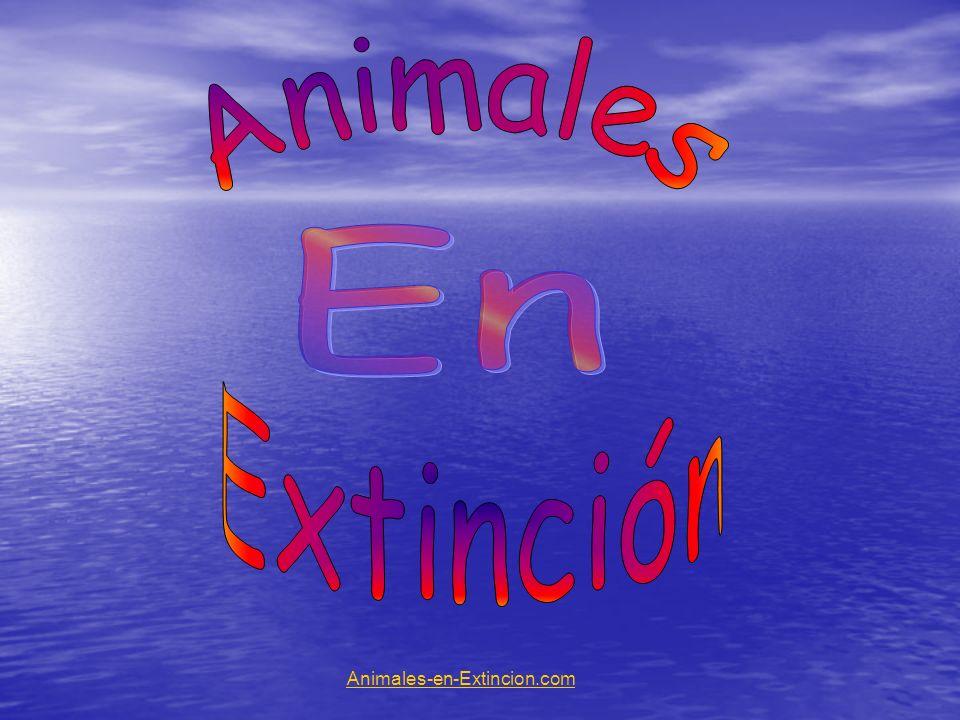 Animales En Extinción Animales-en-Extincion.com