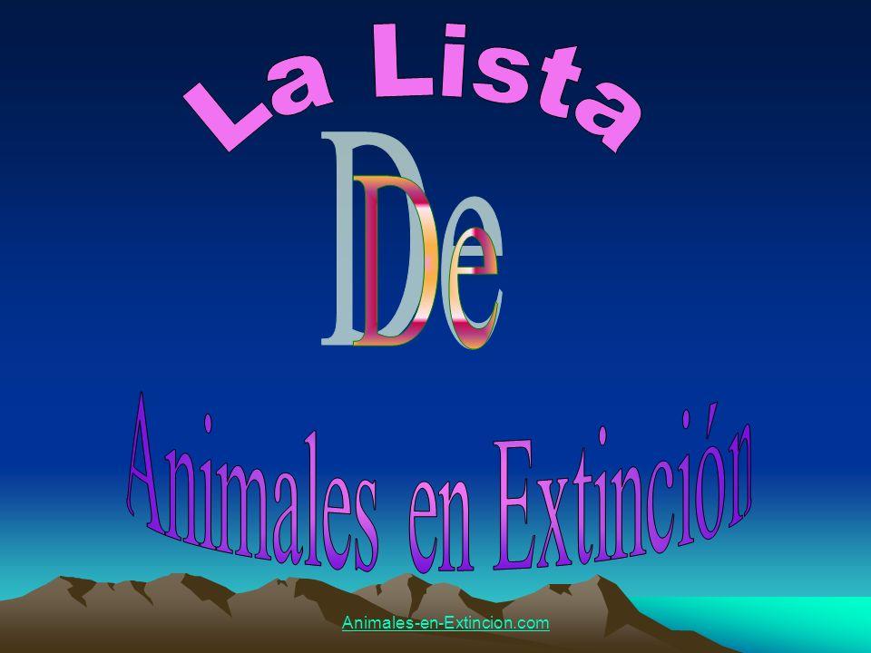 La Lista De Animales en Extinción Animales-en-Extincion.com