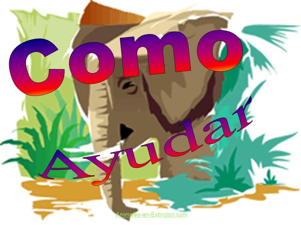 Como Ayudar Animales-en-Extincion.com