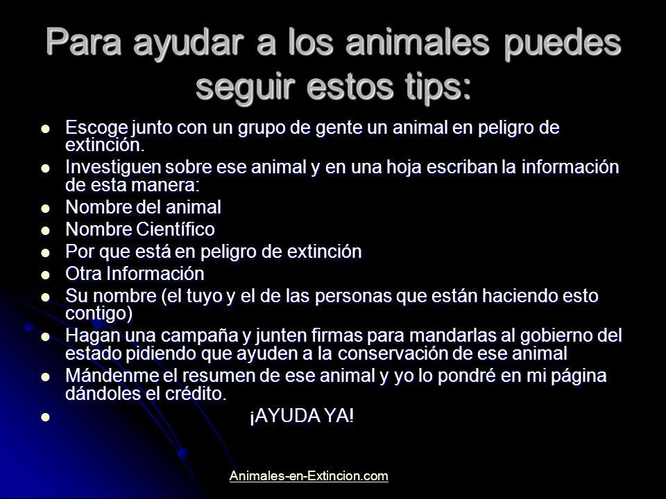 Para ayudar a los animales puedes seguir estos tips: