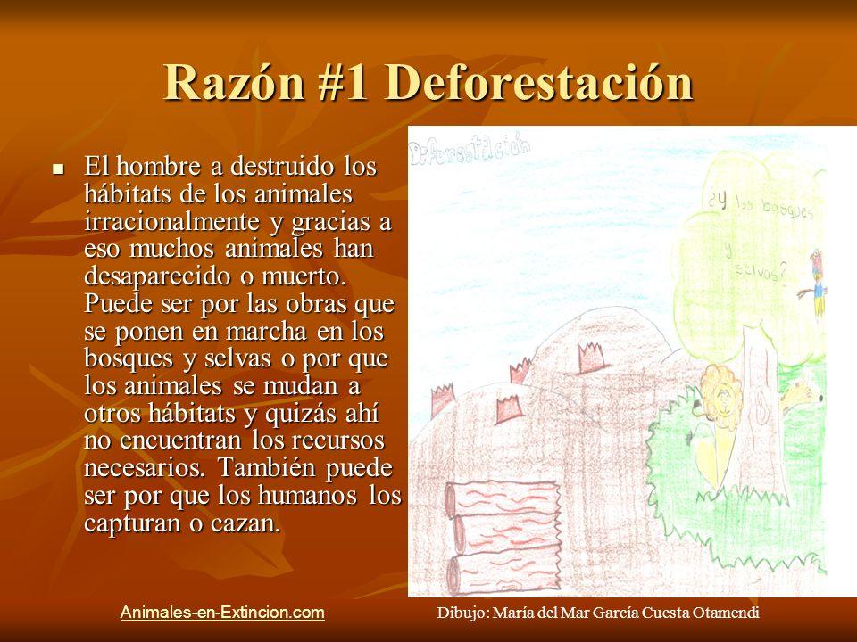 Razón #1 Deforestación