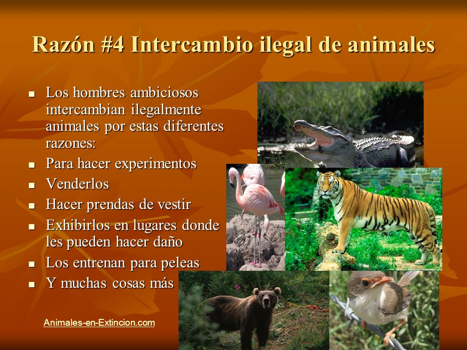 Razón #4 Intercambio ilegal de animales