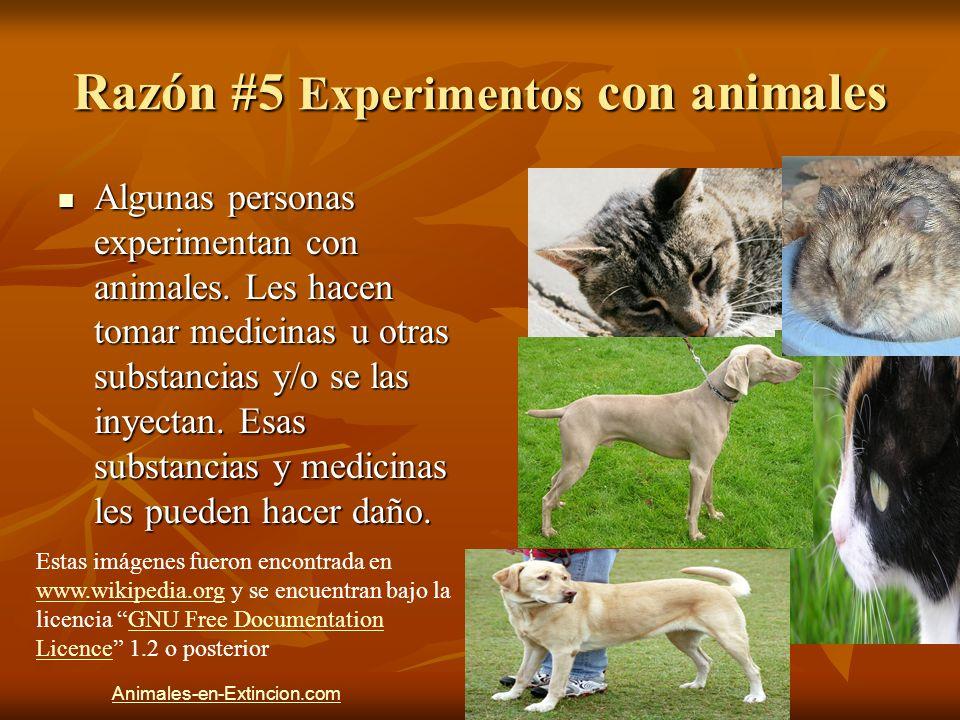 Razón #5 Experimentos con animales