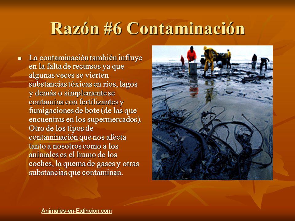 Razón #6 Contaminación