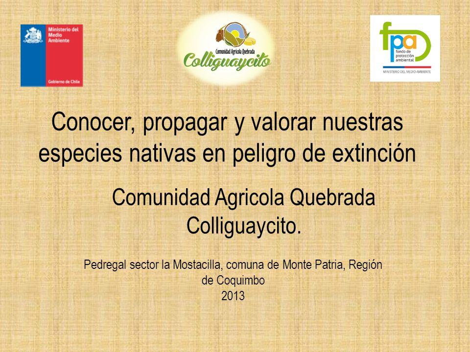 Comunidad Agricola Quebrada Colliguaycito.