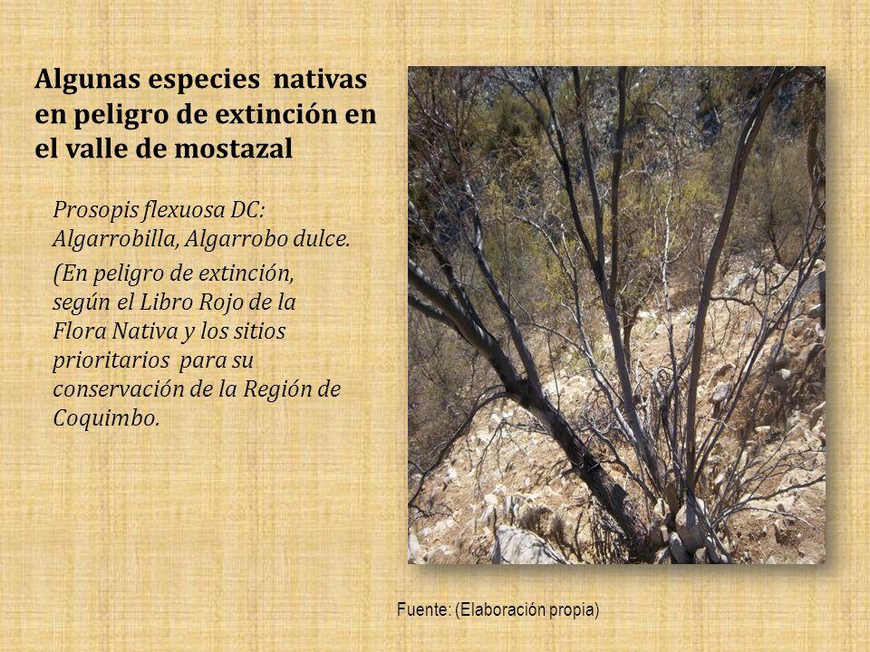 Algunas especies nativas en peligro de extinción en el valle de mostazal