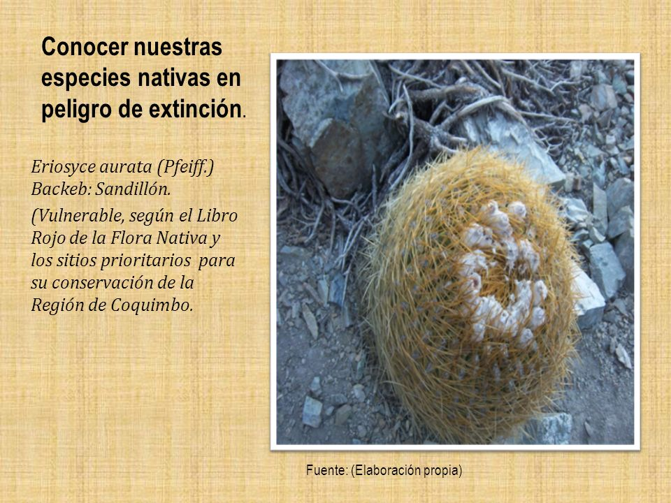 Conocer nuestras especies nativas en peligro de extinción.