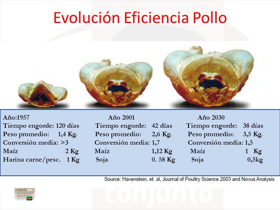 Evolución Eficiencia Pollo