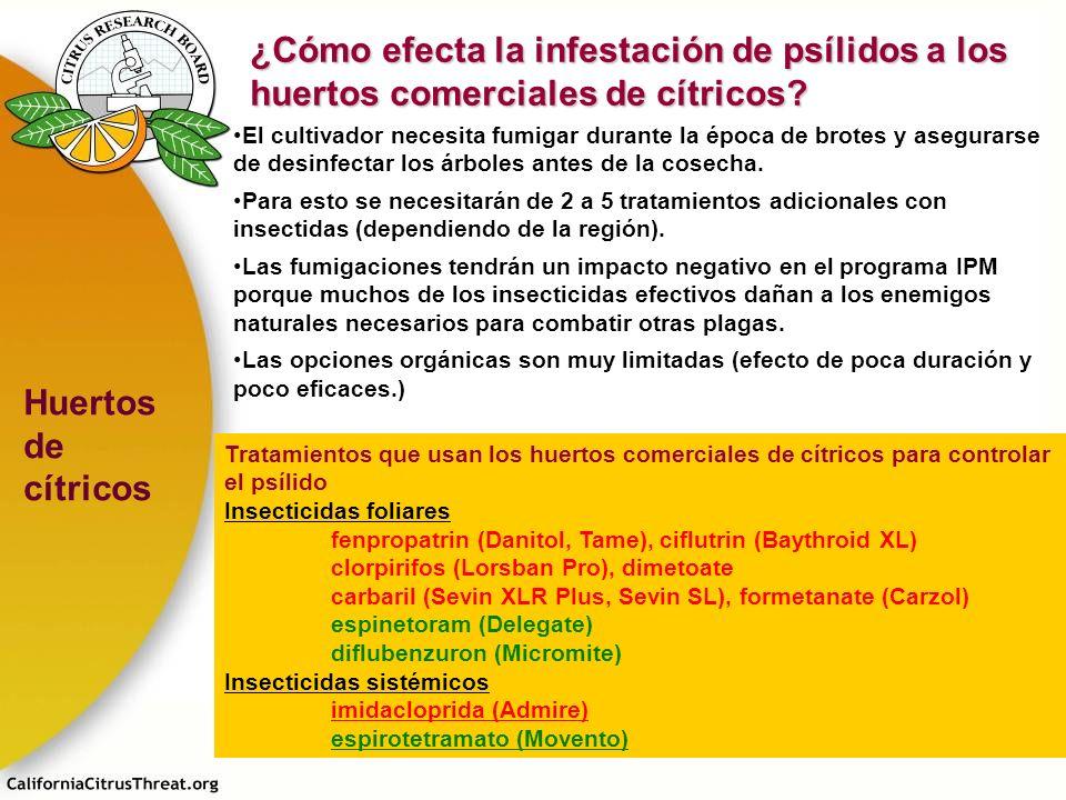 ¿Cómo efecta la infestación de psílidos a los huertos comerciales de cítricos