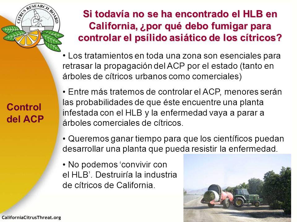 Si todavía no se ha encontrado el HLB en California, ¿por qué debo fumigar para controlar el psílido asiático de los cítricos