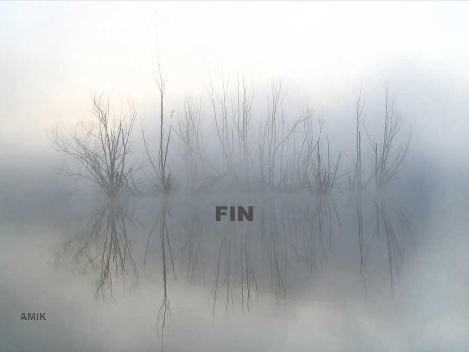 FIN AMIK