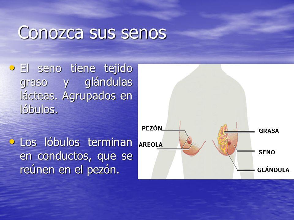 Conozca sus senos El seno tiene tejido graso y glándulas lácteas. Agrupados en lóbulos.