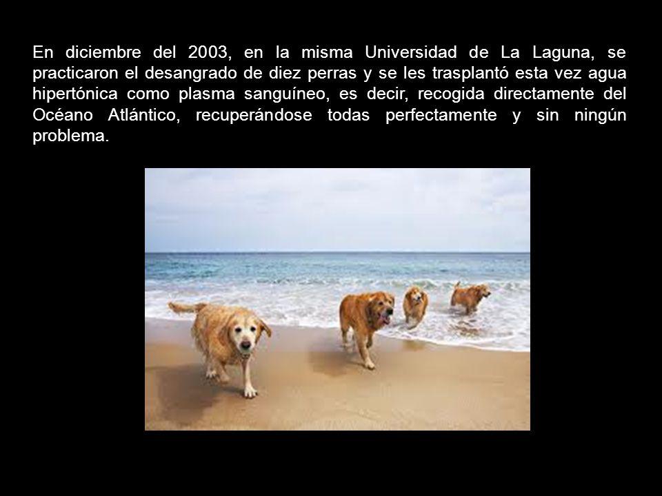 En diciembre del 2003, en la misma Universidad de La Laguna, se practicaron el desangrado de diez perras y se les trasplantó esta vez agua hipertónica como plasma sanguíneo, es decir, recogida directamente del Océano Atlántico, recuperándose todas perfectamente y sin ningún problema.