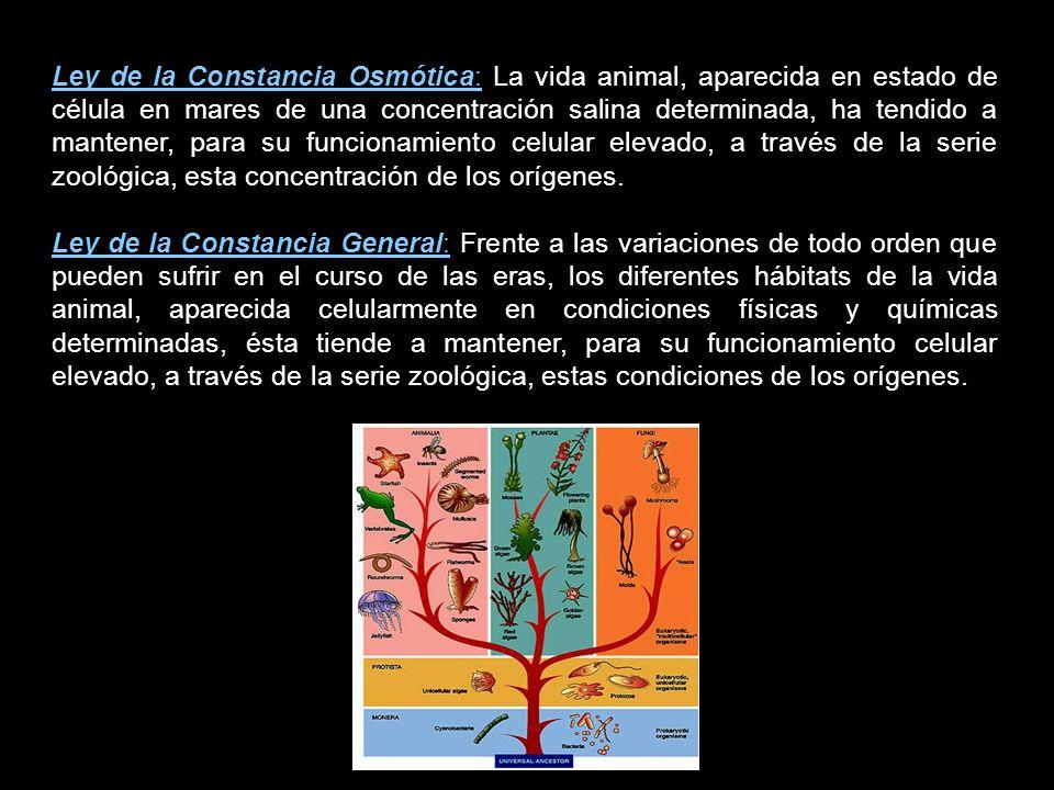 Ley de la Constancia Osmótica: La vida animal, aparecida en estado de célula en mares de una concentración salina determinada, ha tendido a mantener, para su funcionamiento celular elevado, a través de la serie zoológica, esta concentración de los orígenes.