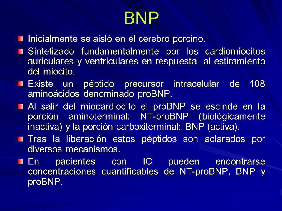 BNP Inicialmente se aisló en el cerebro porcino.