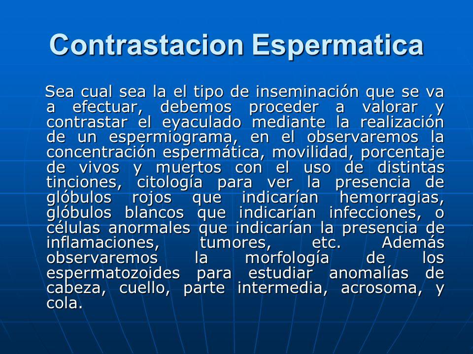 Contrastacion Espermatica