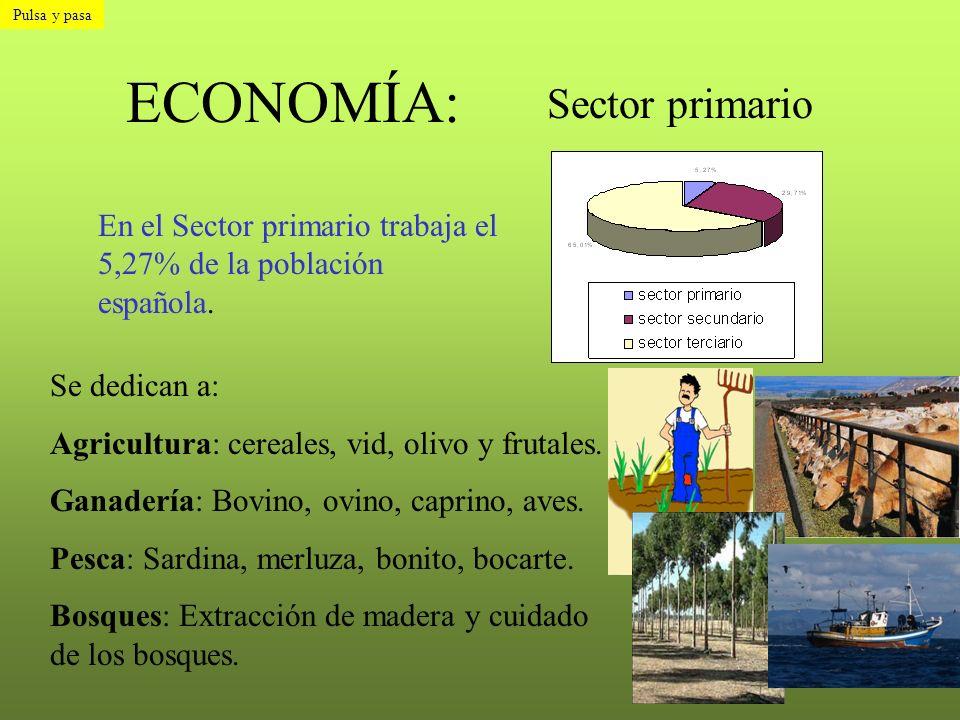 ECONOMÍA: Sector primario