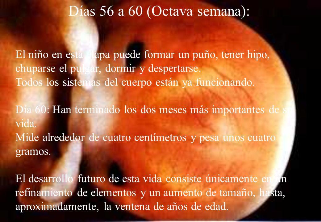 Días 56 a 60 (Octava semana):