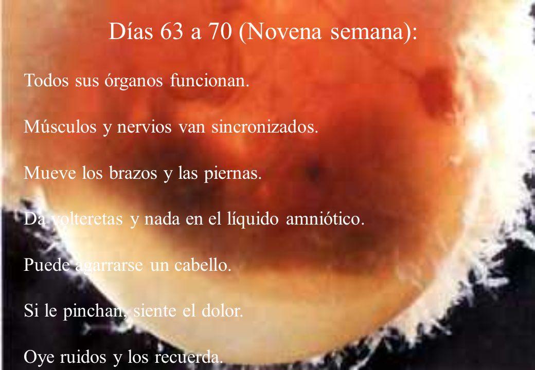 Días 63 a 70 (Novena semana):