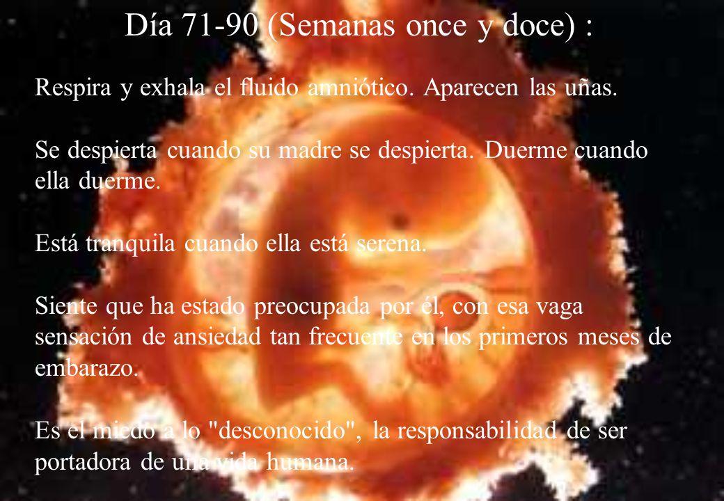 Día 71-90 (Semanas once y doce) :