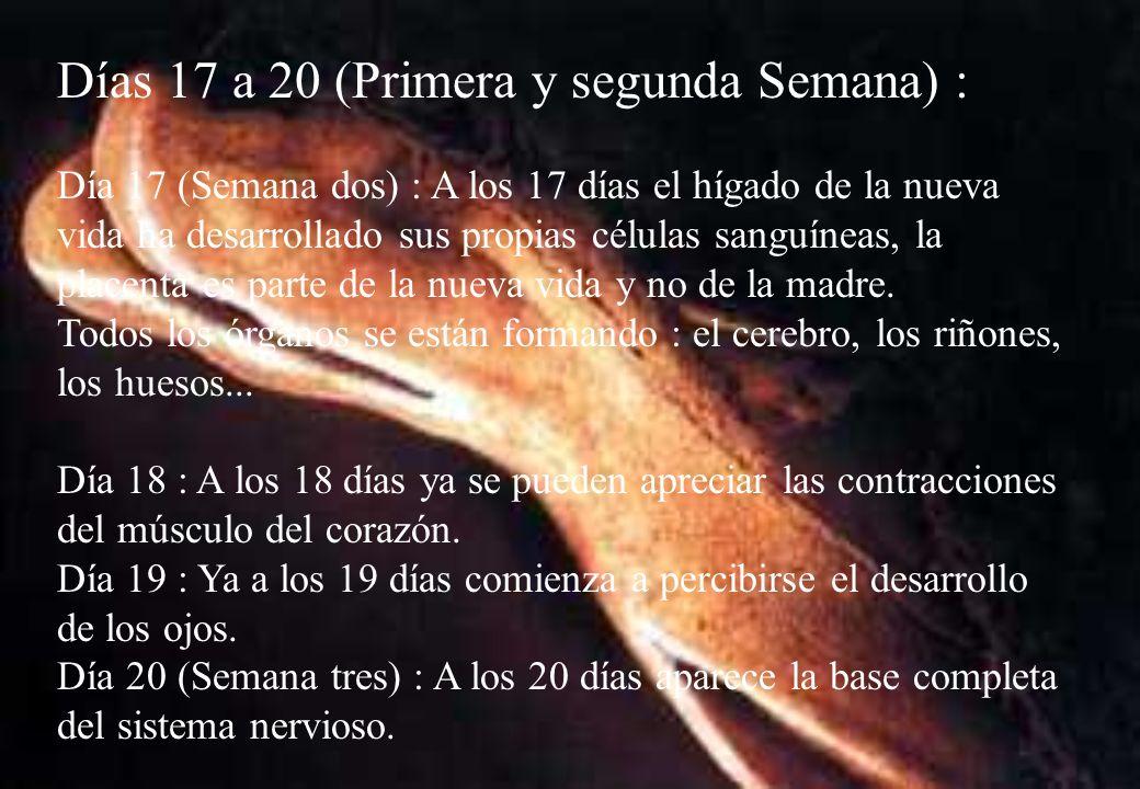 Días 17 a 20 (Primera y segunda Semana) :
