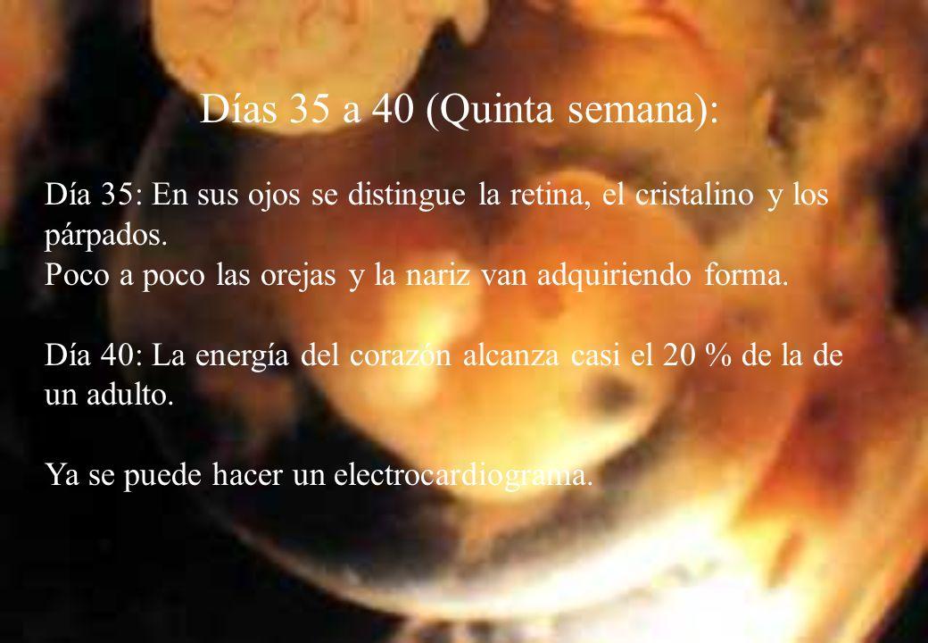 Días 35 a 40 (Quinta semana):