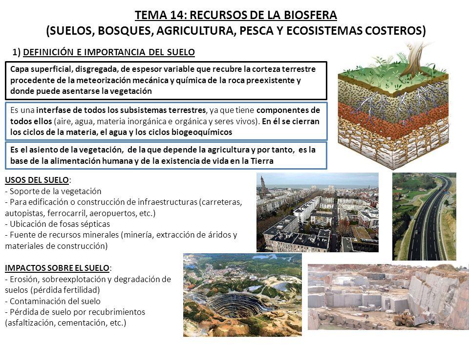 1 definici n e importancia del suelo ppt descargar for Roca definicion