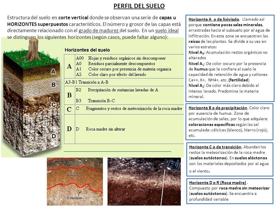 1 definici n e importancia del suelo ppt descargar for Perfil del suelo wikipedia