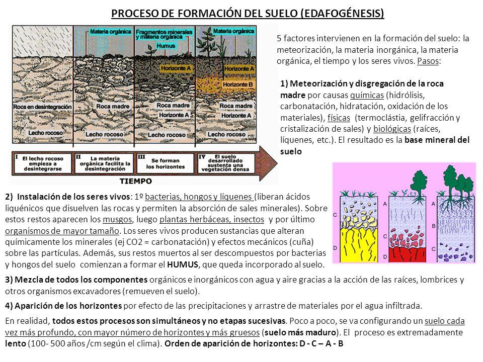 1 definici n e importancia del suelo ppt descargar for Proceso de formacion del suelo