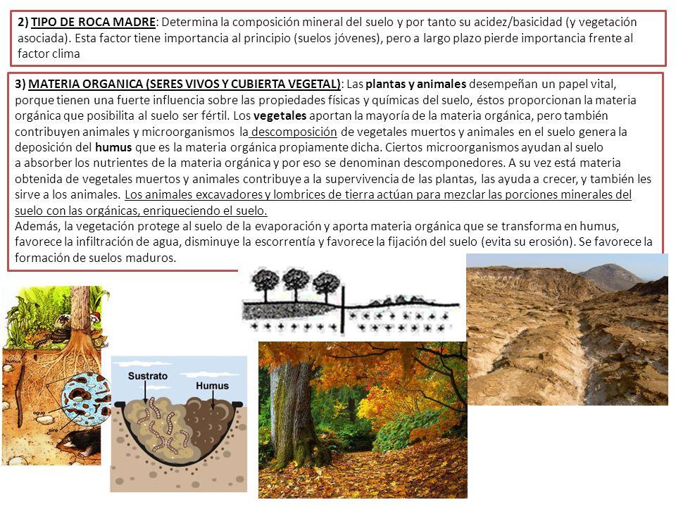 1 definici n e importancia del suelo ppt descargar for Cuales son las caracteristicas del suelo