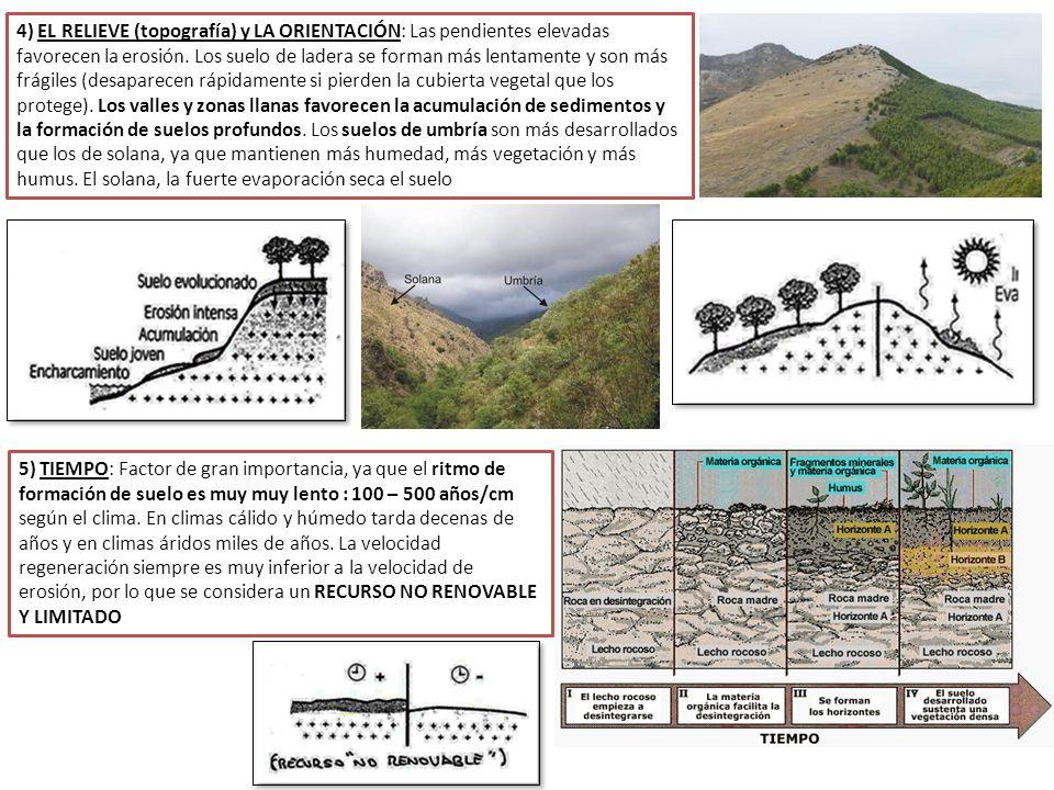 1 definici n e importancia del suelo ppt descargar for Como se forma y desarrolla el suelo