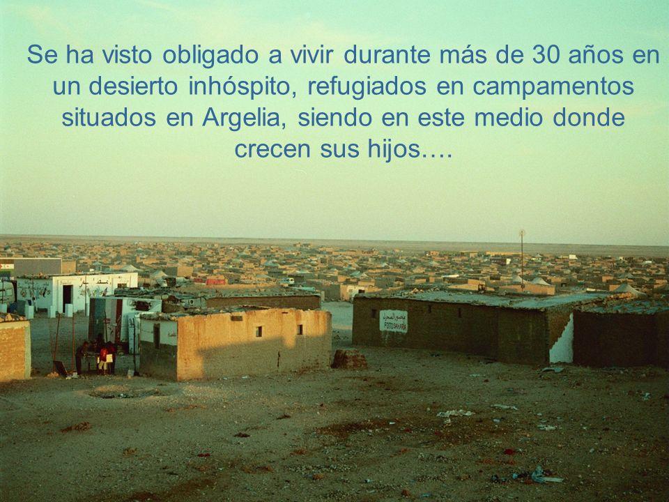 Se ha visto obligado a vivir durante más de 30 años en un desierto inhóspito, refugiados en campamentos situados en Argelia, siendo en este medio donde crecen sus hijos….