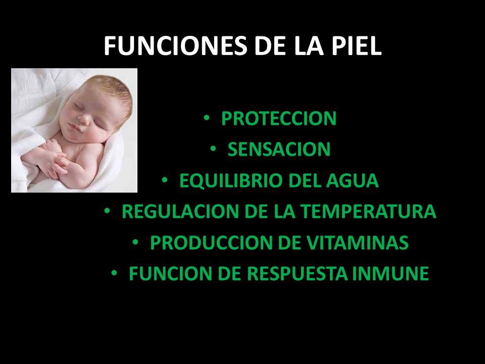 FUNCIONES DE LA PIEL PROTECCION SENSACION EQUILIBRIO DEL AGUA