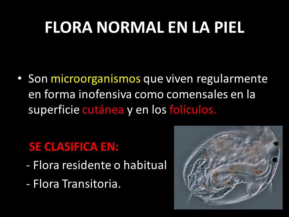 FLORA NORMAL EN LA PIEL Son microorganismos que viven regularmente en forma inofensiva como comensales en la superficie cutánea y en los folículos.
