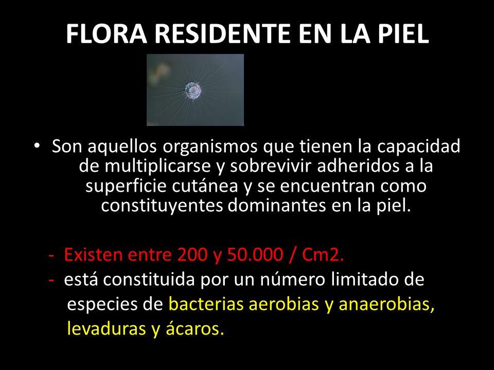 FLORA RESIDENTE EN LA PIEL