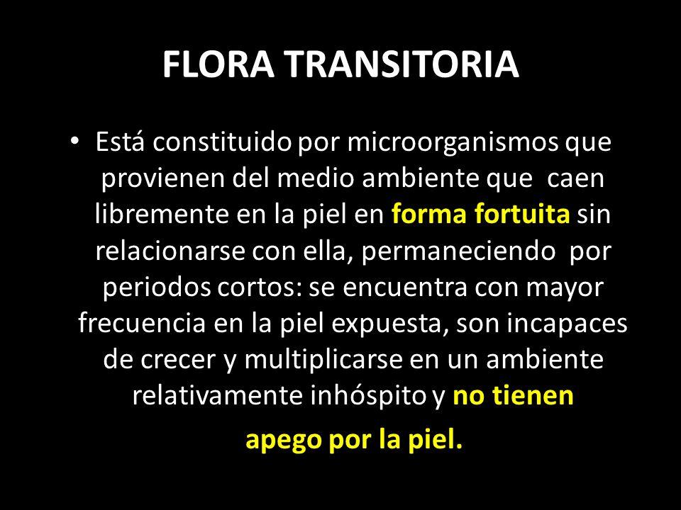 FLORA TRANSITORIA