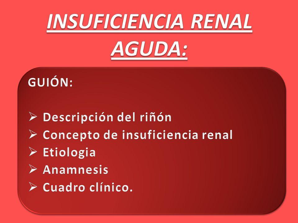 INSUFICIENCIA RENAL AGUDA: