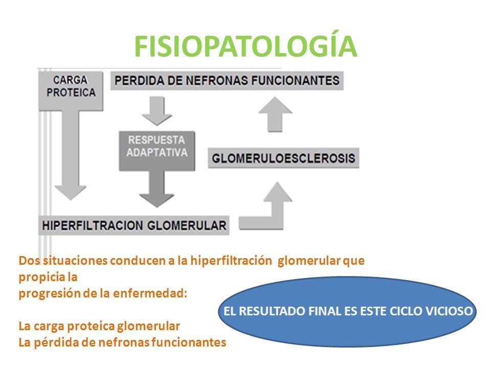 FISIOPATOLOGÍA Dos situaciones conducen a la hiperfiltración glomerular que propicia la. progresión de la enfermedad: