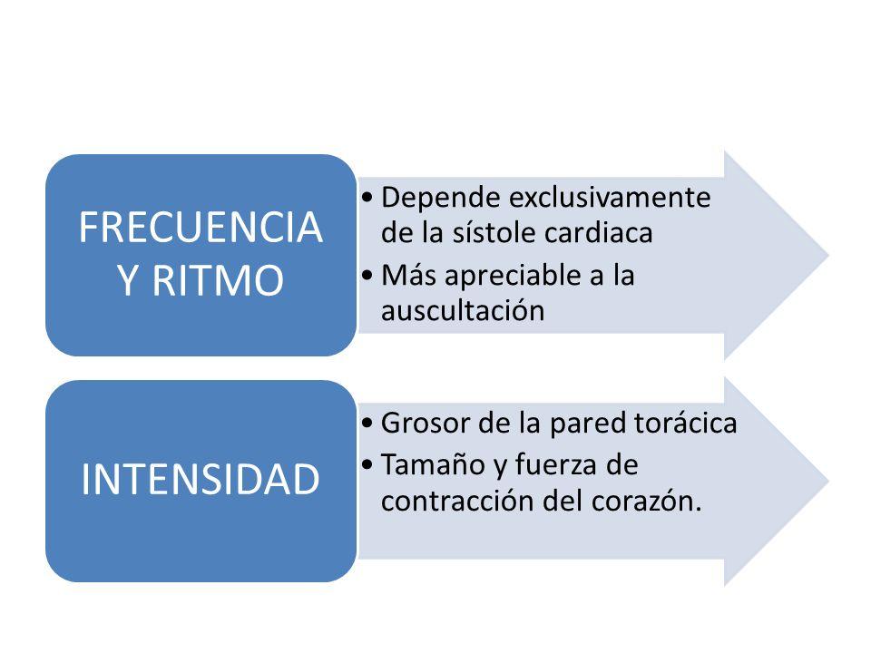FRECUENCIA Y RITMO Depende exclusivamente de la sístole cardiaca. Más apreciable a la auscultación.