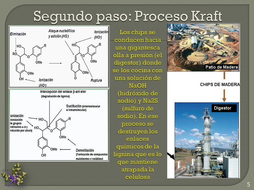 Segundo paso: Proceso Kraft