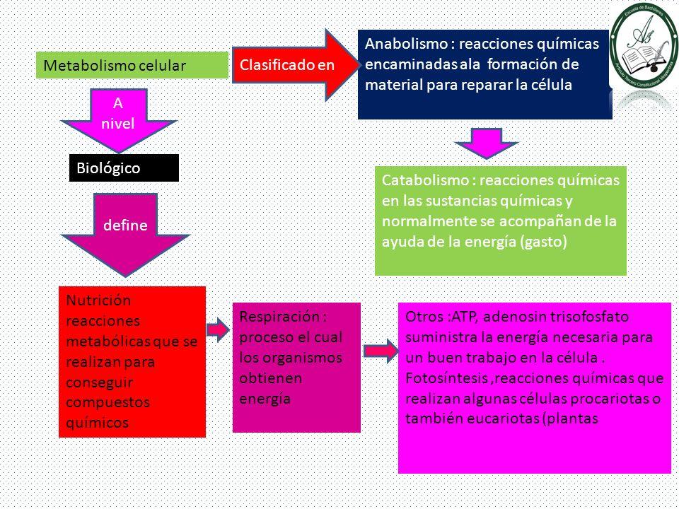 Clasificado en Anabolismo : reacciones químicas encaminadas ala formación de material para reparar la célula.