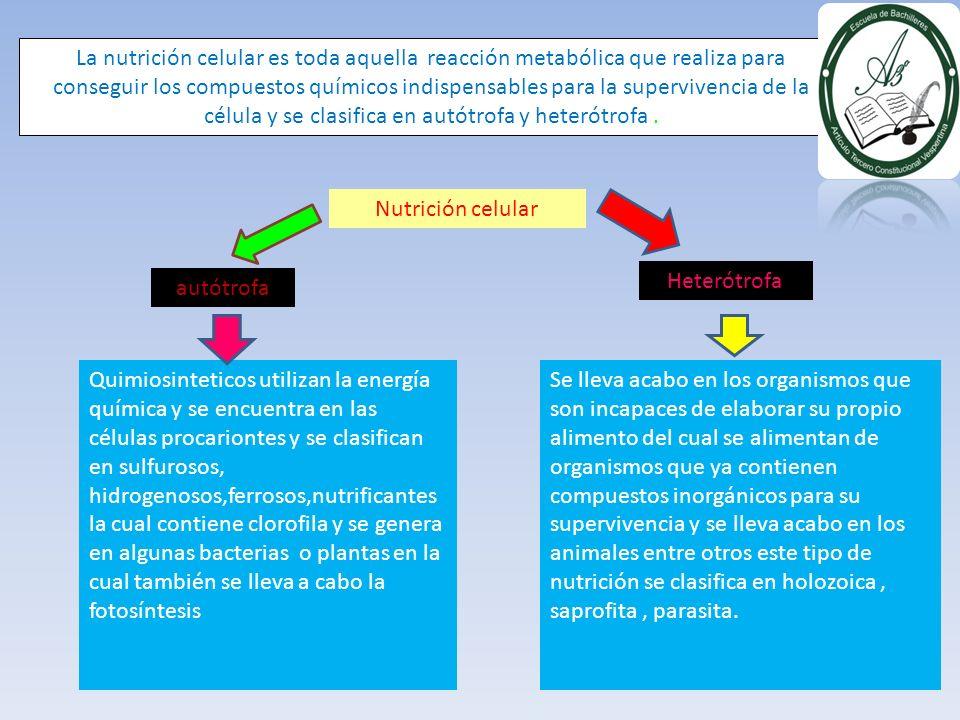 La nutrición celular es toda aquella reacción metabólica que realiza para conseguir los compuestos químicos indispensables para la supervivencia de la célula y se clasifica en autótrofa y heterótrofa .