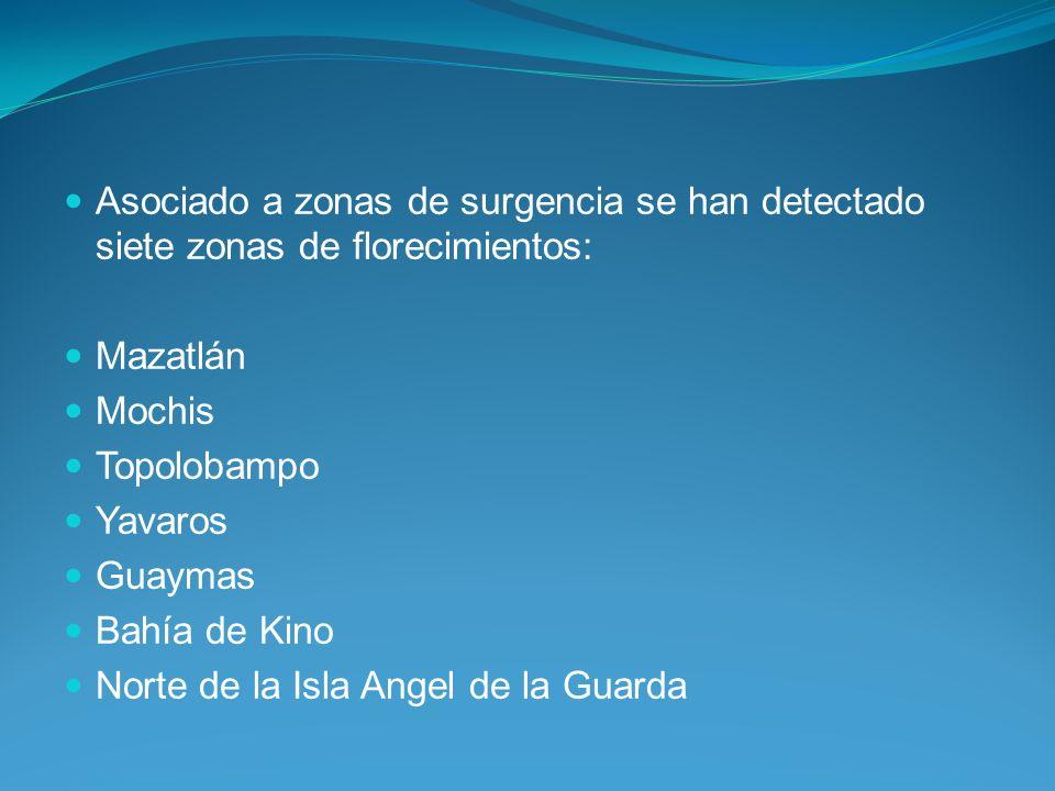 Asociado a zonas de surgencia se han detectado siete zonas de florecimientos: