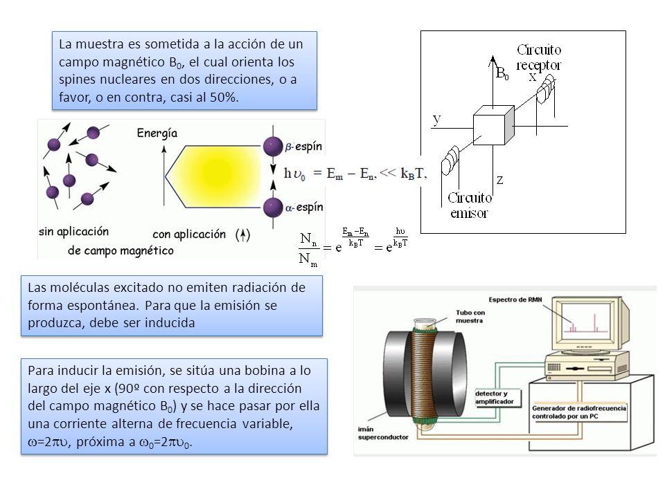 La muestra es sometida a la acción de un campo magnético B0, el cual orienta los spines nucleares en dos direcciones, o a favor, o en contra, casi al 50%.