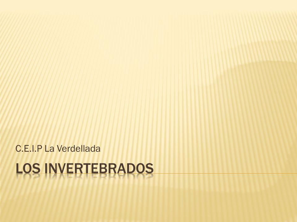 C.E.I.P La Verdellada Los invertebrados